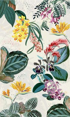 tropical botanic - irina muñoz clares | fashion graphics + illustration