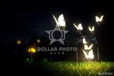 https://www.dollarphotoclub.com/stock-photo/Butterflies/43635909 Dollar Photo Club millions of stock images for $1 each