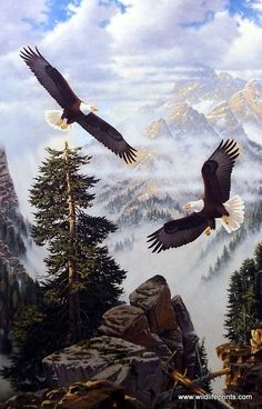 Derk Hansen paints a pair of majestic eagles soaring through a foggy mountain ravine after A PASSING STORM. Bald Eagles can fly up to an altitude of 10,000 feet, and maintain a hunting area of up to 1