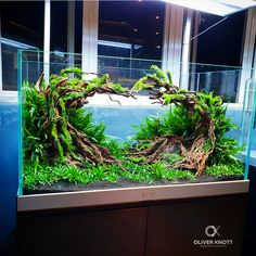 Top Quality Aquatics sur Instagram : Heart scape! Have you ever tried putting together your own planted aquarium? If so, how'd it go? I'd love to hear about it! —— Follow…