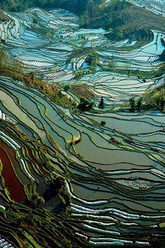 Riziéres yuang yuang yunnan chine (by ichauvel)