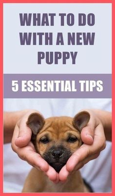 Easy Tips To Leash Train Your… #dogtrainingcourse Best Puppies, Toy Puppies, Small Puppies, Best Dogs, Puppies Tips, Havanese Puppies, Yorkies, Bulldog Puppies, Corgi