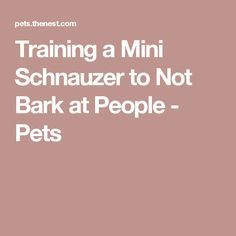 Training a Mini Schnauzer to Not Bark at People - Pets
