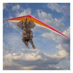 Flying Elephant ... lol