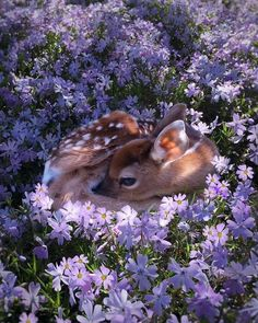 Bambi baby deer in the flowerbed Cute Creatures, Beautiful Creatures, Animals Beautiful, Pretty Animals, Beautiful Flowers, Beautiful Pictures, Purple Animals, Beautiful Things, Beautiful People
