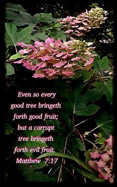 I want to be the good tree. (Ruby Slippers Oak Leaf Hydrangeas.)