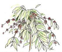 Coffee Plant, Cool, Plants, Coffee Flower, Plant, Planets