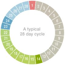 Ovulation Calculator - If 28 day cycle most fertile days as 13 - 17 days after 1st day of LMP