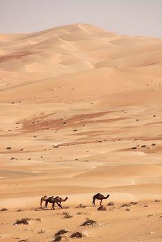Parties Illustration Description Camels grazing in the desert – Dubai, UAE – Read More – Abu Dhabi, Sharjah, Wonderful Places, Beautiful Places, Deserts Of The World, Desert Life, Ras Al Khaimah, Places Around The World, Beautiful Landscapes