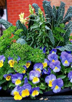 Container Garden | jardin potager with kale, yellow snapdragons, violas, parsley
