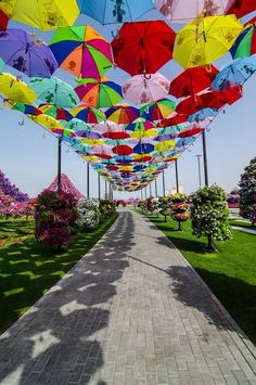 The world's most beautiful #flower #garden in #Dubai  http://www.kafepauza.mk/zanimlivosti/nova-top-atrakcija-vo-dubai-ogromna-cvetna-gradina-koja-go-odzema-zdivot/