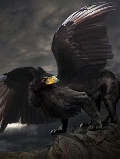 the Black Gryphon  Oh, how I love these mystical creatures