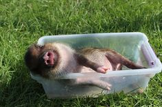 Massage and Spa Marketing Content Clubs Massage Marketing, Teacup Pigs, Massage Business, Skin Care Spa, Mini Pigs, Cute Piggies, Baby Pigs, Social Media Images, Down On The Farm