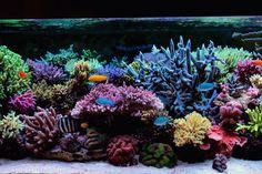 Krzysztof Tryc's reef aquarium