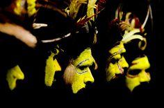 By the way...: Les Papous de Nouvelle Guinée photographiés par Eric Lafforgue