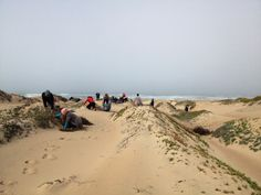 Over 30 volunteers headed out to the Rancho Guadalupe Dunes Preserve to pull invasive ice plant. Ice Plant, Invasive Plants, The Dunes, Volunteers, Preserve, Habitats, Restoration, Sky, Beach