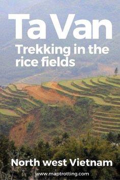 Rice fields in Ta Van village, north west Vietnam