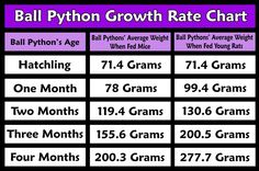 19 Awesome Ball Python Growth Rate Chart