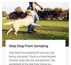 Most recent Snap Shots Stop Dog From Jumping Instantly- Train Your Own Dogs Concepts How Are Dogs Provided Basic Obedience Training ? It includes the most standard directions you will Guard Dog Training, Dog Training Bells, Therapy Dog Training, Dog Training Pads, Therapy Dogs, Training Your Dog, Dog Growling, Different Dogs, Take A Nap