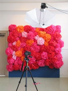 Big tissue flowers, perfect for a photo booth backdrop!!!!