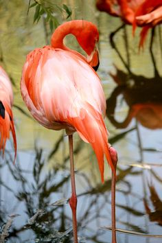 flamingo - Zoo de Granby Summer 2014 - Copyright Mélissa Roy Together Lets, Summer 2014, Animals, Color, Photography, Animales, Animaux, Colour, Animal