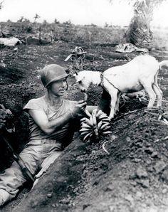 Un soldat partage une banane avec une chèvre pendant la bataille de Saipan (Iles mariannes), 1944