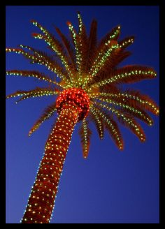 Lighted Palm Tree | Flickr - Photo Sharing!