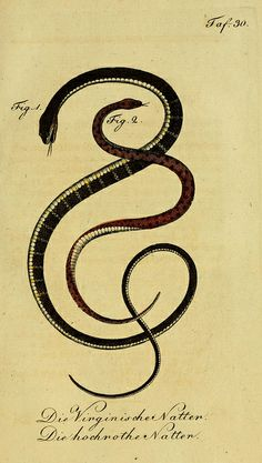 year of the #snake