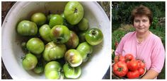 Vedecký výskum prišiel s prekvapivým zistením – liek, krotý má doma hádam každý má doslova zázračný vplyv na paradajky. Gardening, Fruit, Vegetables, Food, Meal, Garten, The Fruit, Essen, Vegetable Recipes