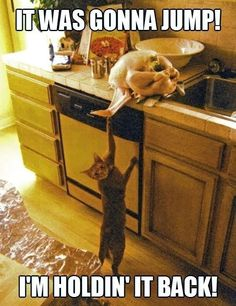 30 Funny animal captions - part 17 (30 pics)
