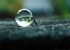 """An ant on the move does more than a dozing ox.""  - Lao Tzu - pinned with panormus"