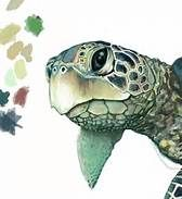Sea turtle drawings - Bing Images
