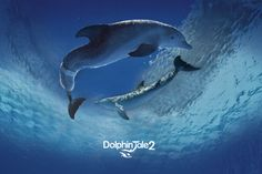 Visit the official shop of the Clearwater Marine Aquarium. Get the latest Dolphin Tale 2, Winter the dolphin and Clearwater Marine Aquarium apparel, accessories, toys, games and gifts..