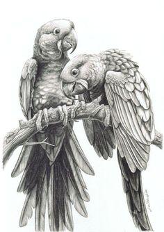 parrot drawing - Recherche Google