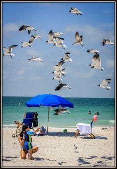 Caladesi Island Honeymoon Island, Back Road, Island Life, Roads, Palm, Florida, Ocean, Beach, Places