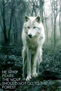 Who is afraid of the bad wolf? He who fears the wolf, should not walk in the forest