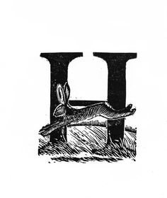 H for Hare - A creature that lives as much in folk lore as in the wild