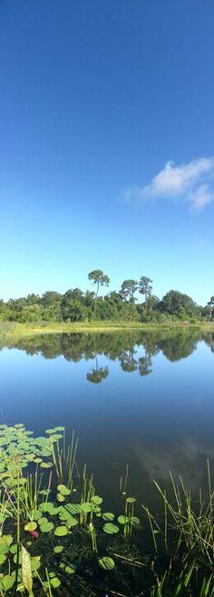 Boca Ciega Millennium park, discovered this beautiful pond on my morning bike ride