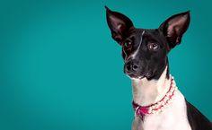 Somos especialista em fotografia Pet, tratamos todos os ensaio como se foce um ensaio fotográfico de uma família.