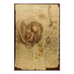 Studies of Embryos Posters
