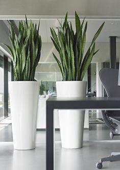 33 Indoor Garden Office and Office Plants Design ~ House Of Gallery Plant Design, Garden Design, House Design, Office Plants, Garden Office, Outdoor Plants, Outdoor Gardens, Plantas Indoor, Pot Jardin