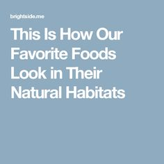 This IsHow Our Favorite Foods Look inTheir Natural Habitats