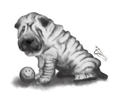 Shar pei . Digital draw . :)