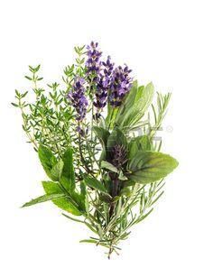 Fresh herbs rosemary thyme mint basil lavender  Stock Photo