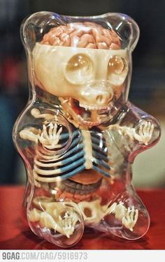 Hahaha...I totally want this! Anatomy of a gummy bear *This is like the coolest and cutest thing I have seen!!*
