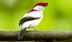 www.joserobertoradialista.com: Brasil tem cinco animais sob grande risco de extinção
