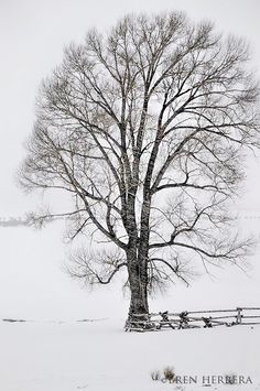 Winter in Grand Teton National Park, Part I