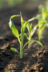 Do plants need commercial food? Great for grades 5-8.