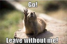 Funny Baby Animals with Captions   Funny Baby Animals with Captions
