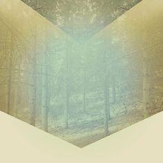 Chevron Forest  by Hallwood
